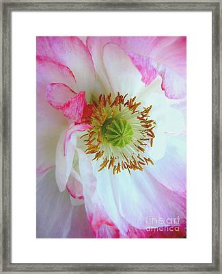 Shirley Poppy Framed Print by Shirley Sirois