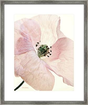 Shirley Watercolor Framed Print by Chris Berry