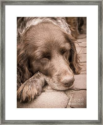 Shishka Dog Dreaming The Day Away Framed Print by Peta Thames