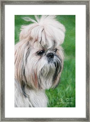 Shitsu Puppy Framed Print by Aleksey Tugolukov