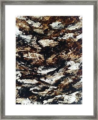 Shoaling  Framed Print by Nicola Brown
