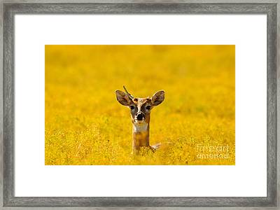 Shootin' High And Right Ed Framed Print by Robert Frederick