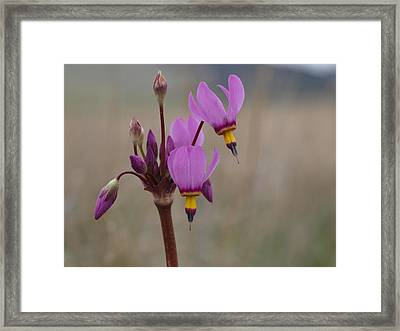 Shooting Stars Framed Print by Jenessa Rahn