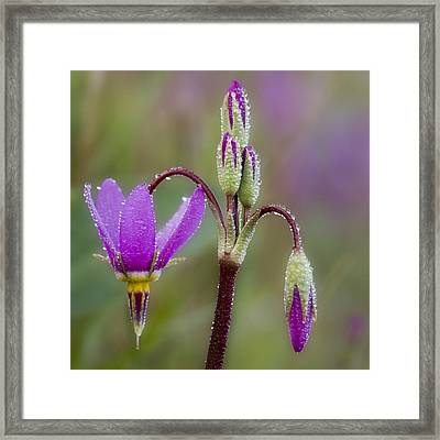 Framed Print featuring the photograph Shooting Stars Square by Sonya Lang