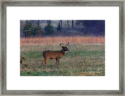 Shooting With A Camera Framed Print by Leslie Kirk