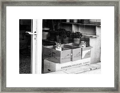 Framed Print featuring the photograph Shop Window Cats by Laura Melis