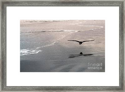 Shore Bird Framed Print by Gregory Dyer