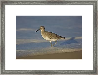 Shore Bird Mg_7903 Framed Print