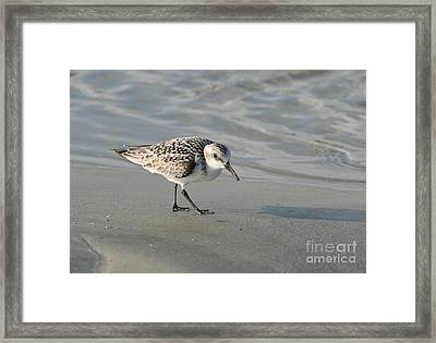 Shore Bird On Ocean Beach Framed Print