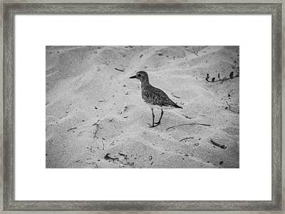 Framed Print featuring the photograph Shore Bird by Phil Abrams