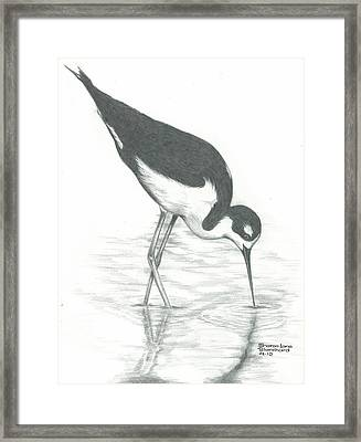 Shore Bird Framed Print by Sharon Blanchard