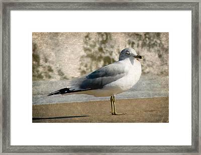 Shore Bird Framed Print