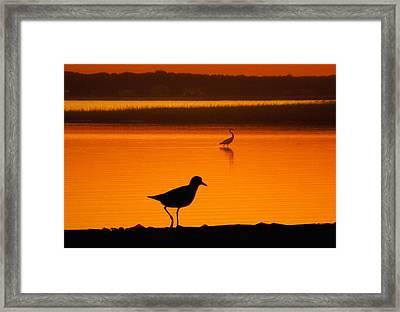 Shore Birds Framed Print