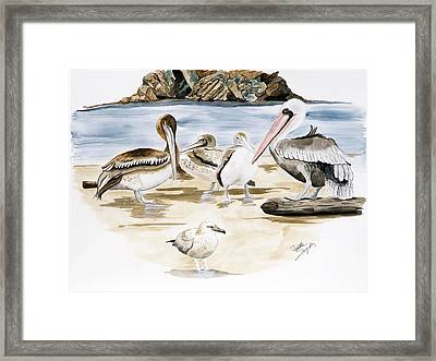 Shore Birds Framed Print by Joette Snyder