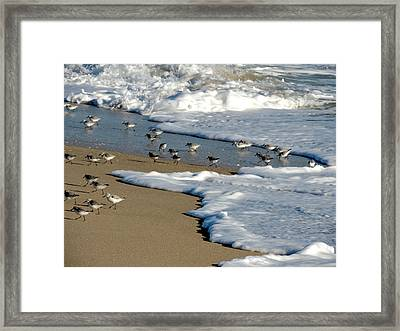 Shore Birds South Florida Framed Print by Marilyn Holkham