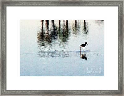 Shorebird 1.0388 Framed Print by Stephen Parker