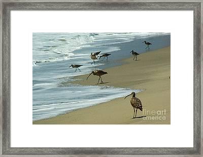 Shorebirds 1.4168 Framed Print by Stephen Parker