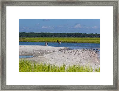 Shorebirds And Marsh Grass Framed Print