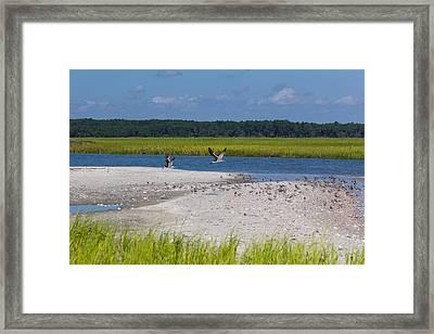 Shorebirds And Marsh Grass Framed Print by Patricia Schaefer