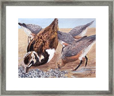 Shorebirds Framed Print