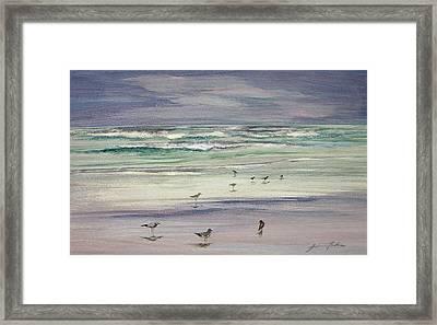 Shoreline Birds IIi Framed Print by Julianne Felton