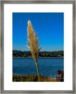 Shoreline Grass Framed Print by Robert Bales