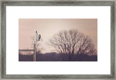 Short Eared Owl At Dusk Framed Print