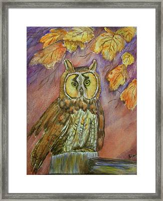 Short Eared Owl Framed Print by Belinda Lawson