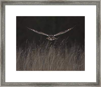 Framed Print featuring the photograph Short Eared Owl Focused by Paul Scoullar