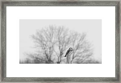 Short-eared Owl In Black And White Framed Print