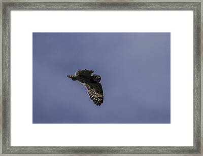 Short Eared Owl In Flight Framed Print by Brad Scott