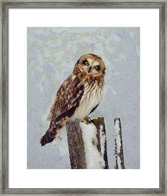 Short-eared Owl   Framed Print by Mark Kiver