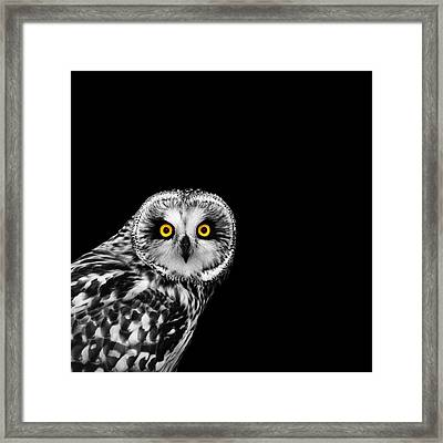 Short-eared Owl Framed Print by Mark Rogan