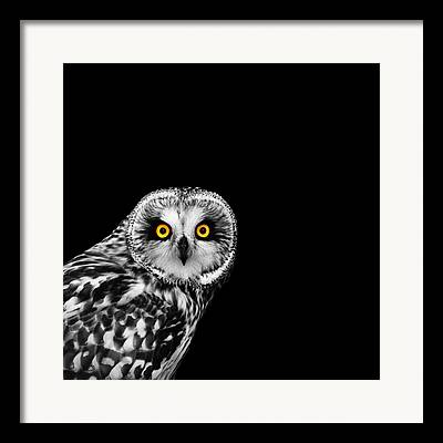 Eagle - Bird Framed Prints
