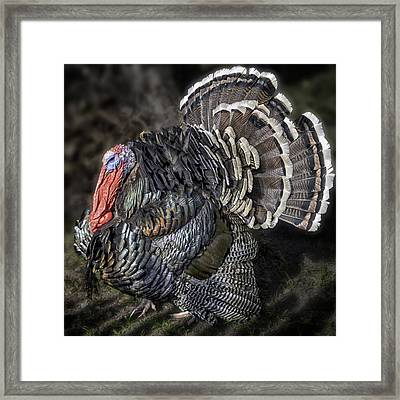 Short Feathers Tom Framed Print by Lynn Palmer