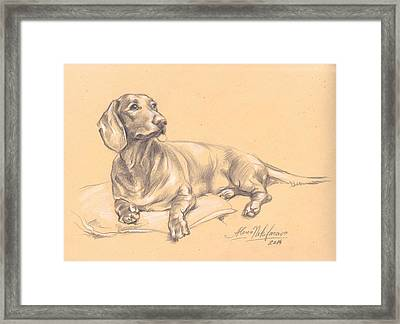 Short-haired Dachshund On A Pillow Framed Print