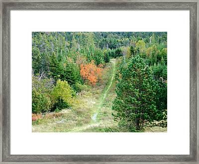 Short Hike Framed Print by Zinvolle Art