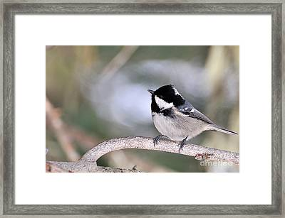 Framed Print featuring the photograph Short Rest by Simona Ghidini