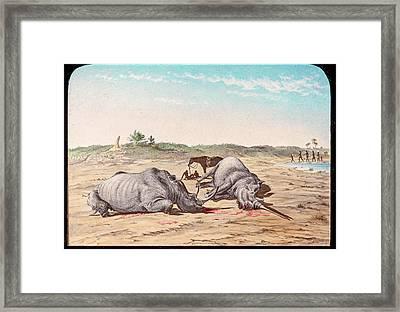 Shot White Rhinoceroses Framed Print by Gustoimages/science Photo Libbrary