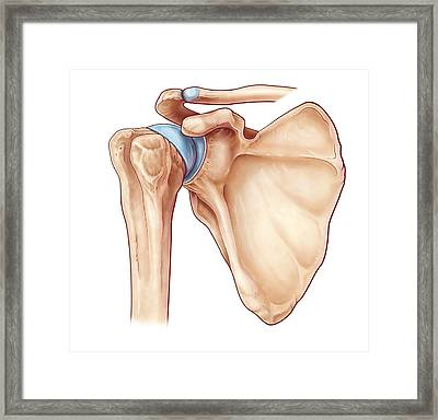Shoulder Joint, Illustration Framed Print
