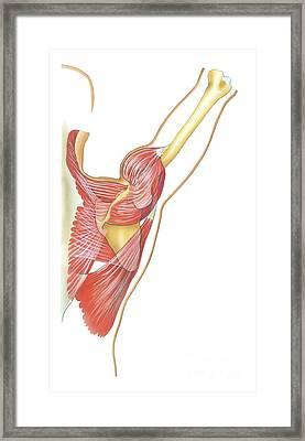 Shoulder Joint Movement, Artwork Framed Print