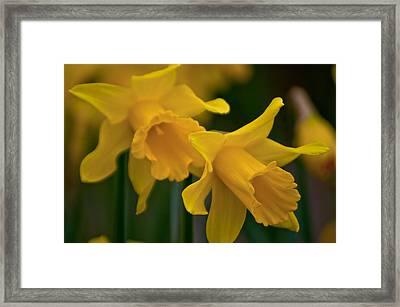 Shout Out Of Spring Framed Print