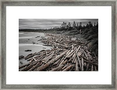 Shoved Ashore Driftwood  Framed Print by Roxy Hurtubise