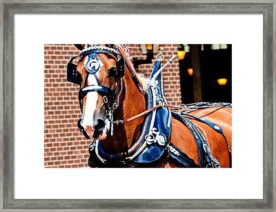 Show Horse Framed Print