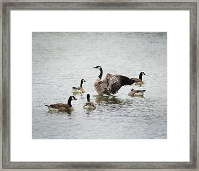 Show Off Framed Print
