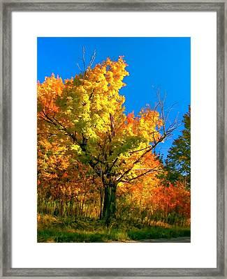 Show Off Framed Print by Steve Harrington