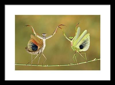 Mantis Framed Prints