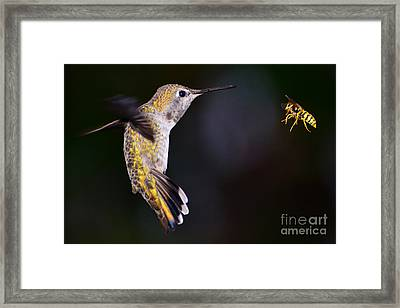 Framed Print featuring the photograph Showdown by Jack Moskovita