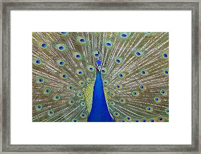 Framed Print featuring the pyrography Showing Off by Shoal Hollingsworth