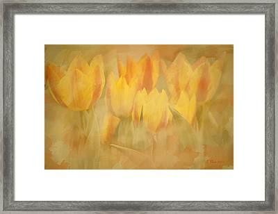 Showtime Tulips Framed Print